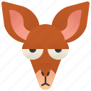 australia, joeys, jumping, kangaroo, marsupial
