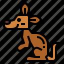 animal, kangaroo, mammal, wildlife