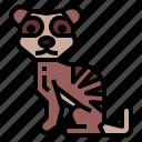 animal, meerkat, wildlife, zoo
