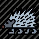 animal, porcupine, wildlife, zoo