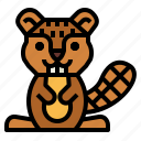 animal, beaver, mammal, wildlife