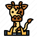 animal, giraffe, mammal, zoo