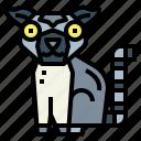 lemur, mammal, wildlife, zoo