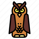 animal, bird, hunter, owl