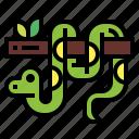 animal, reptile, snake, wildlife