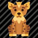 animal, hyena, mammal, wildlife
