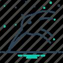bird, okarito, kiwi