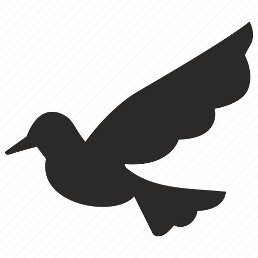 bird, dove, fly, wing icon