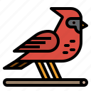 animal, bird, cardinal, ornithology, zoo