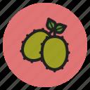 winter, vegetables, fruits, kiwi, kiwifruits, berry