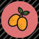 winter, vegetables, fruits, kumquats, citrus, berry