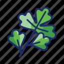 coriander, herb, cilantro