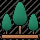 tree, forest, landscape, bush, ecology, botanical, yard