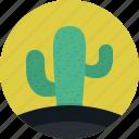 cactus, mexico, nature, plant, tree