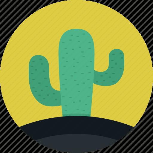 cactus, mexico, nature, plant, tree icon