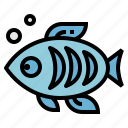 animal, animals, fish, life, sea