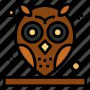 animals, bird, hunter, owl