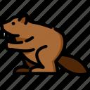 beaver, animal, animals, wild, nature, wild animals