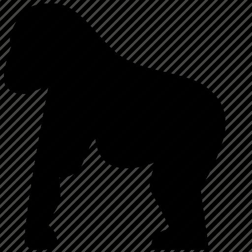 animal, gorilla, monkey, zoo icon
