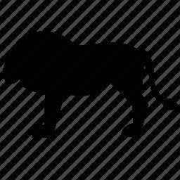 animal, lion, predator, zoo icon