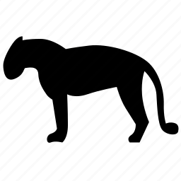 animal, jaguar, panther, predator, puma, tiger, zoo icon