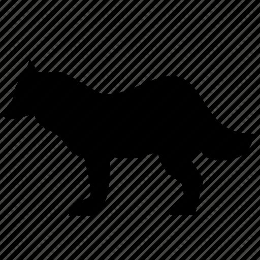 animal, predator, wolf, zoo icon