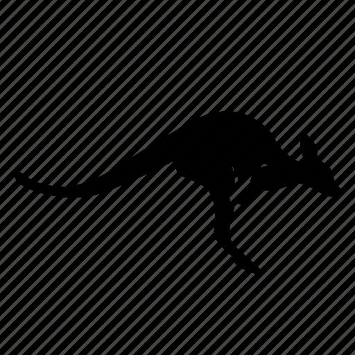 animal, kangaroo, wallaroo, zoo icon