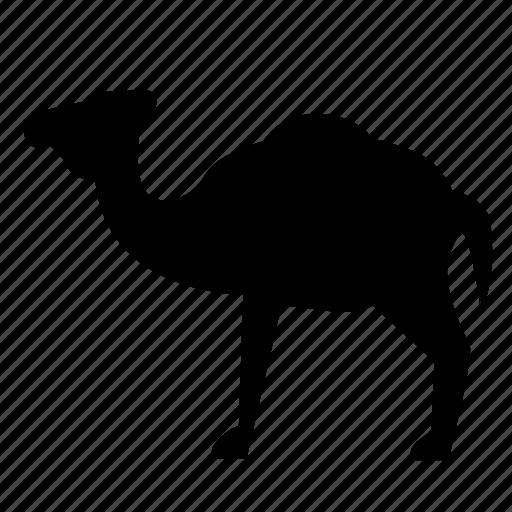 animal, camel, goof, zoo icon