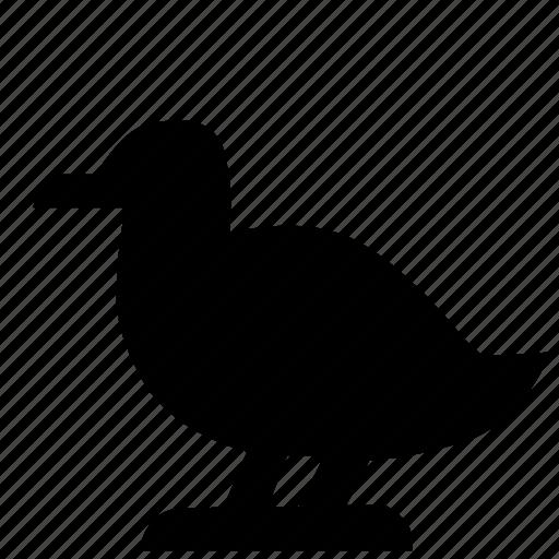 animal, bird, goose, zoo icon