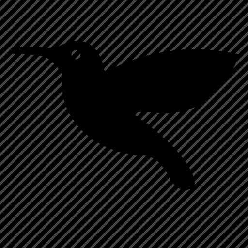 bird, colibri, fly, hummingbird icon