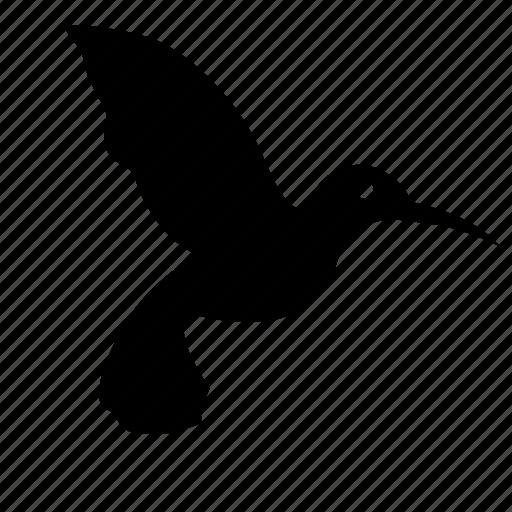 bird, colibri, fly, hummingbird, stork icon
