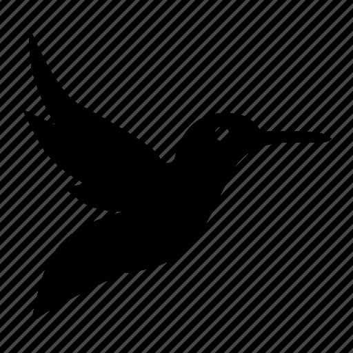 bird, daw, fly, hummingbird, parrot icon
