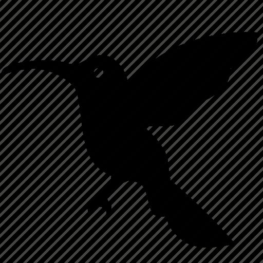 bird, calibri, colibri, hummingbird, sparrow icon