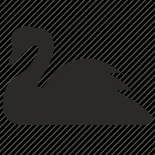 bird, neck, seat, swan, water icon