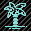 coconut, palm, tree, tropical
