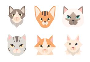 Cat Breed Flat - Wild wild pussy cat
