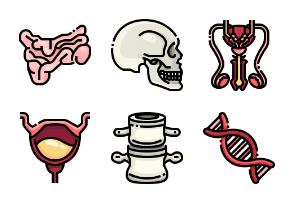 Human Body & Organ