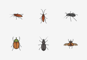 Insects - Colored