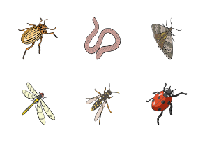 Insects in cartoon style