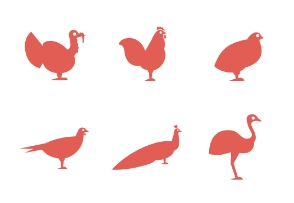 Types of poultry