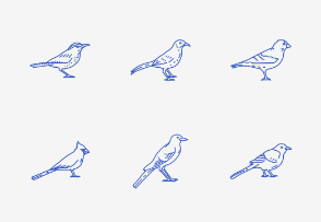 USA State Birds